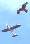 Red Kite with Snoopy